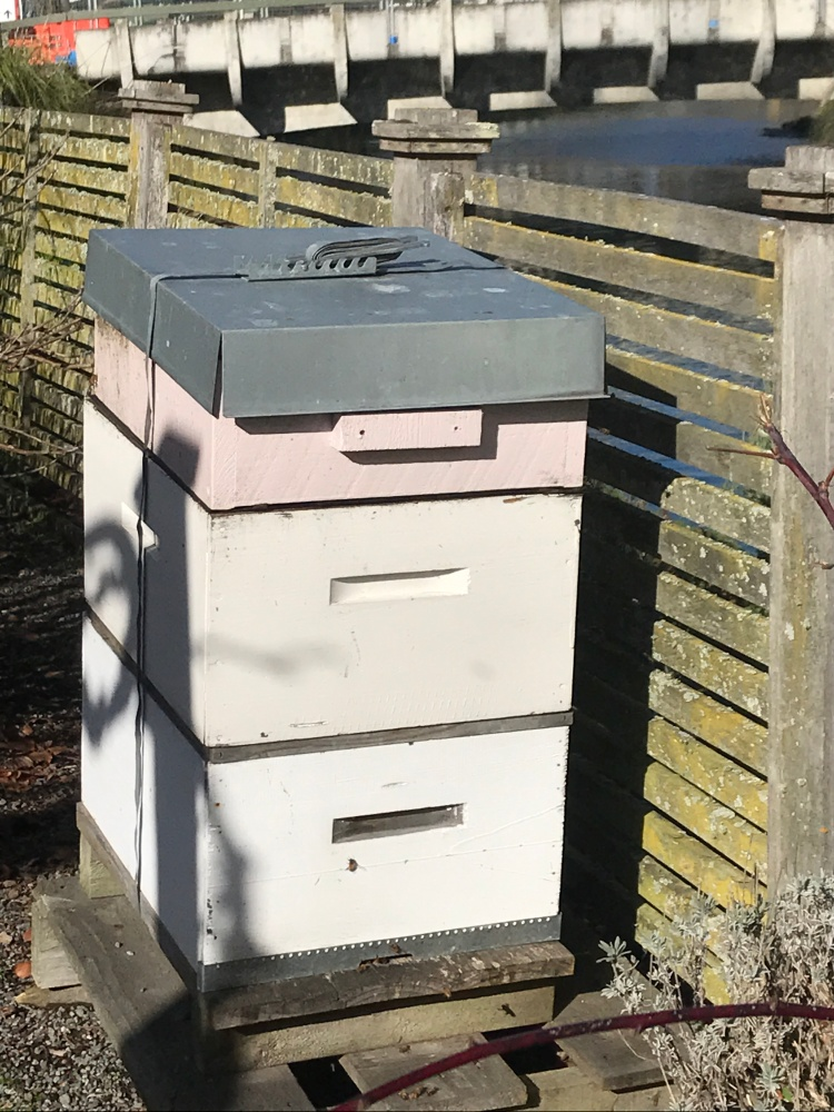 H is for Hives